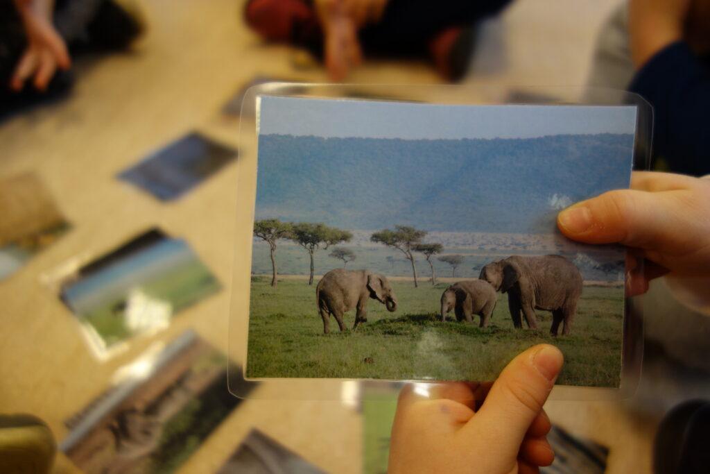 słonie - afrykańskie zwierzęta
